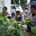 創作活動「野菜の収穫」